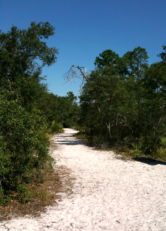 Hiking Trails at Big Lagoon State Park