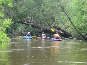 Kayaking on Blackwater River