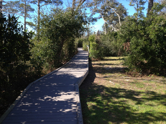 Brackenridge Nature Trail Boardwalk