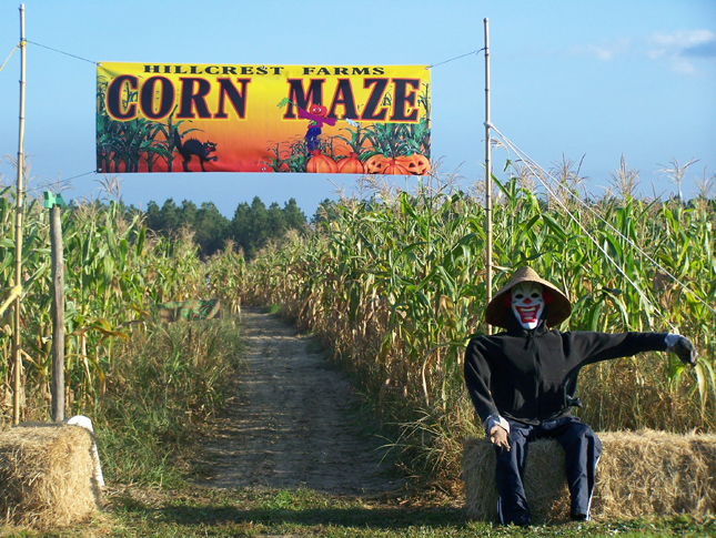 Corn Maze at Hillcrest Farms