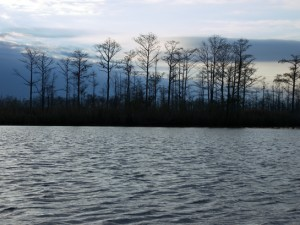 Upper Escambia Bay - photo by Shawn