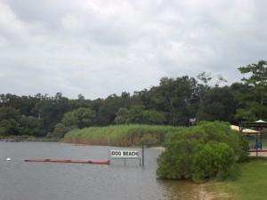 Dog Beach swimming area