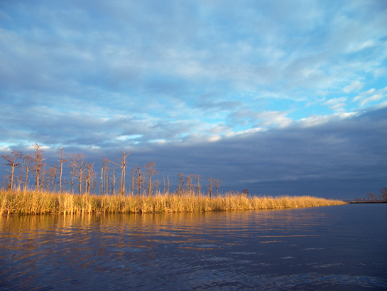 Upper Escambia Bay - Photo by Shawn Brown