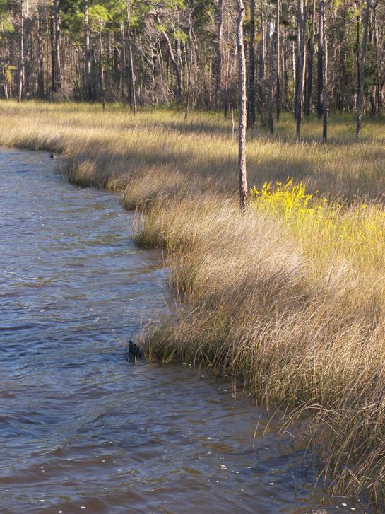 Tarkiln Bayou Seagrass