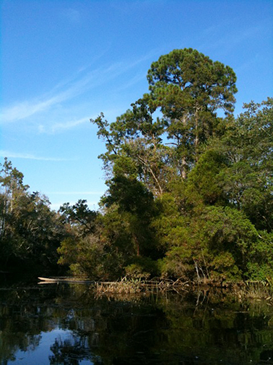 Thompson Bayou at UWF