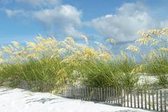 Pensacola Beach Dunes