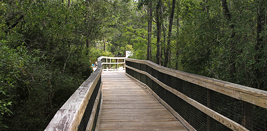 Boardwalk at Blackwater State Park
