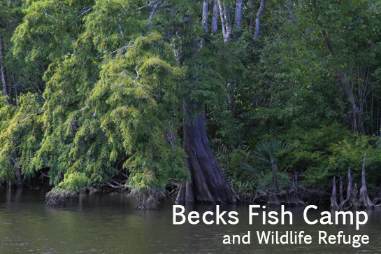 Becks fish camp and wildlife refuge