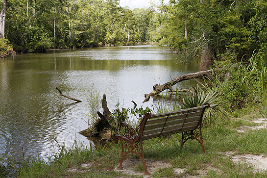 Bench overlooking the bayou