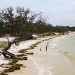 Photo of Deadman's Island in Gulf Breeze
