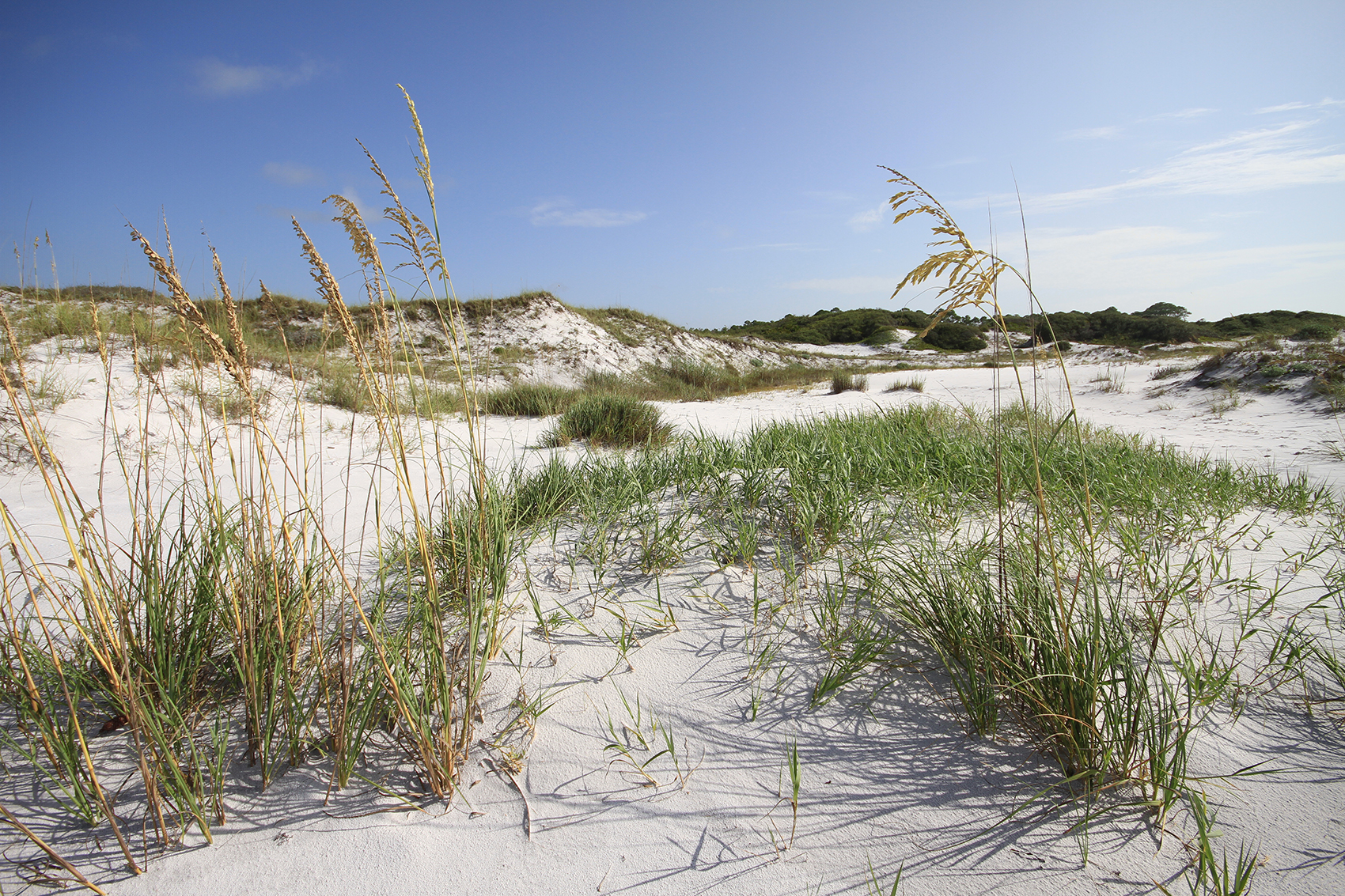 Topsail Hill Preserve State Park Outdoor Gulf Coast Of