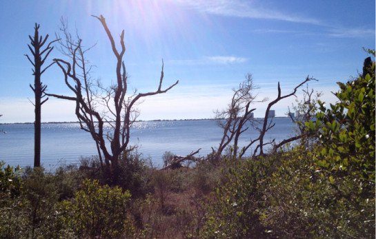 View off the Brackenridge Trail