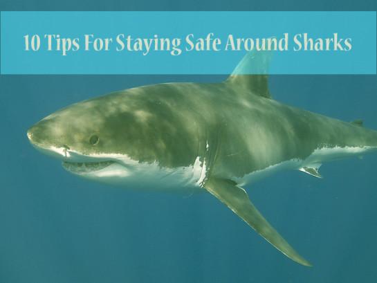 SharkPhotoBlogPost