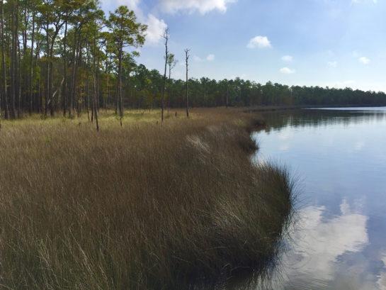 Tarkiln Bayout Preserve State Park