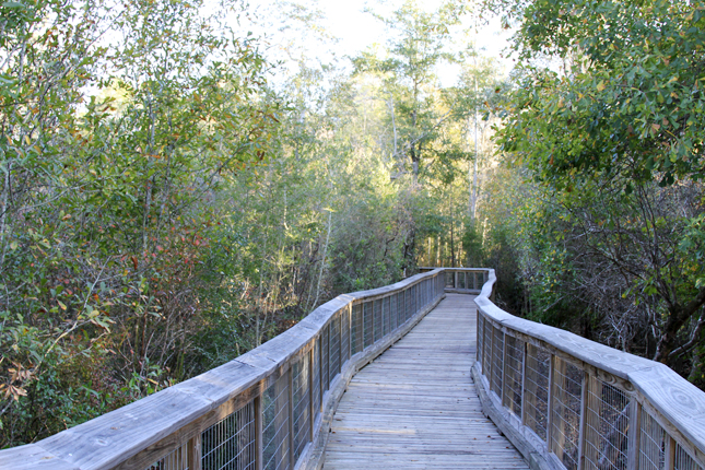 Elevated boardwalk at Arcadia Mill