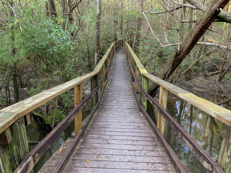 Edward Ball Nature Trail Boardwalk