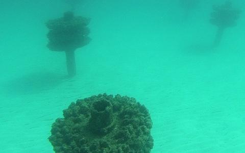 Pensacola Beach Park East Snorkeling Reef Outdoor Gulf Coast Of Northwest Florida