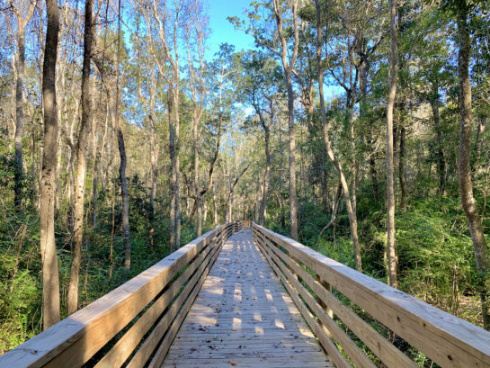 Jones Swamp Boardwalk