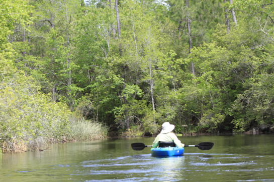Kayaking at Graham Creek