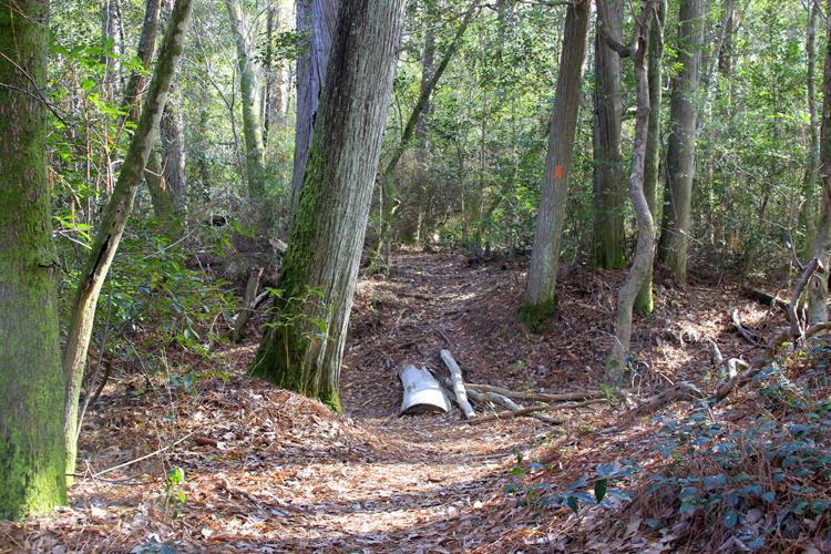 Juniper Creek Trail