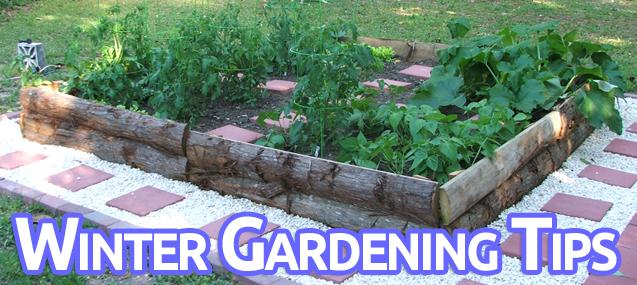 Winter Gardening Tips For Northwest Florida Outdoor Gulf Coast